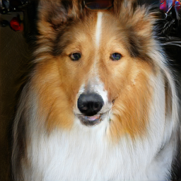 data/collie_0.png