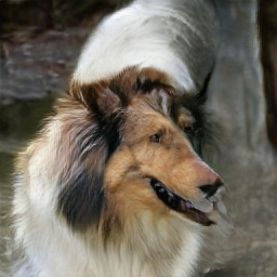 data/collie_3.png